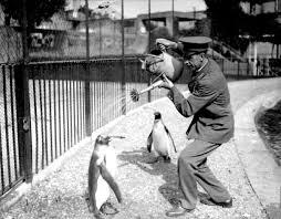 Mentlaist Sebstian Boswell III penguins